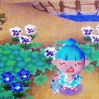Blue pansy