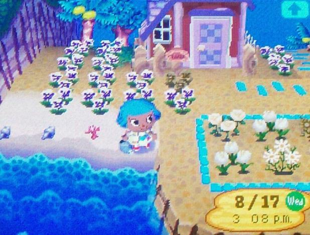 Olivia's white pansy garden