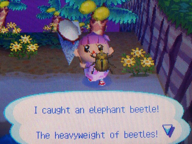Bell catches an elephant beetle