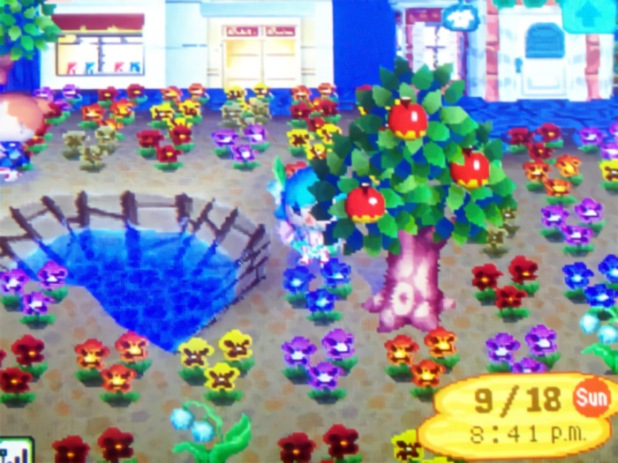 Colorful pansy garden at the shopping center