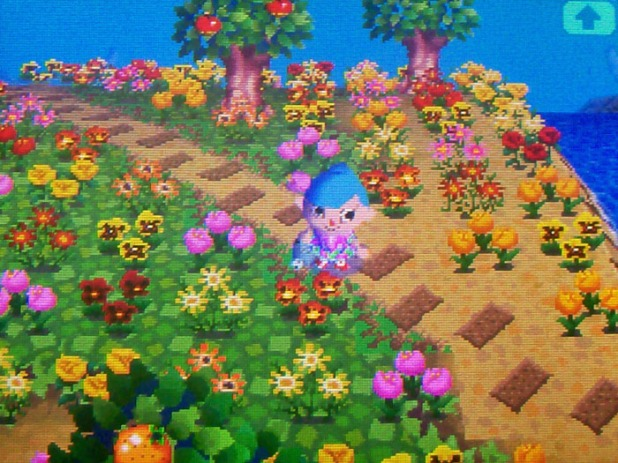 The island flower field
