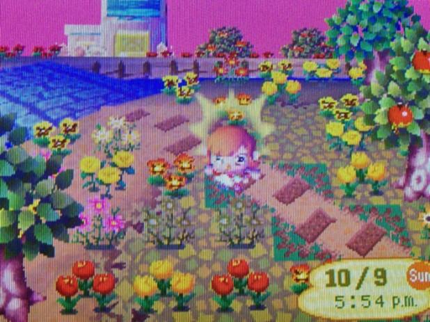Dead flowers on island