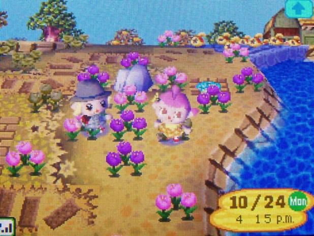 Pink and purple tulips on StarCity's island