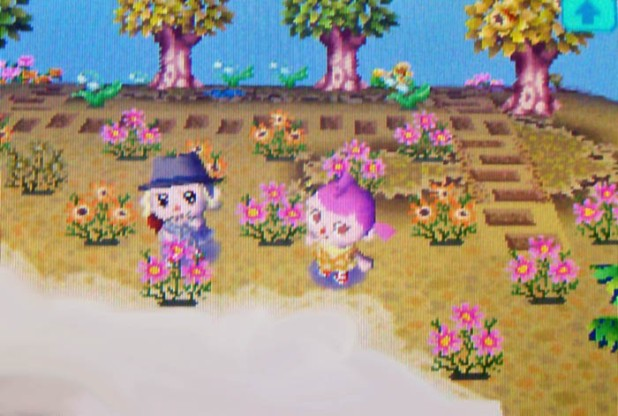 Pink and orange cosmo garden on StarCity's island
