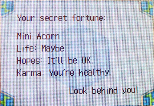 Your secret fortune: Mini Acorn