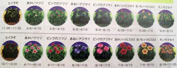 Bush blooming dates